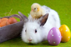 FREE Easter Bunny Photos